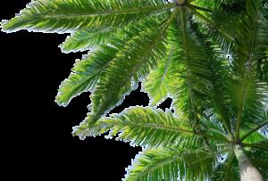 Erholung in der Therme zwischen Palmen
